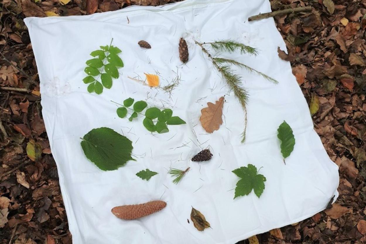 Blättermemory